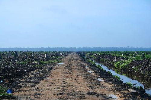 Déforestation due à l'exploitation de l'huile de palme à Sumatra